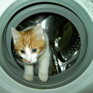 最近洗濯物に変な毛がついてると思ったら…お前かー!