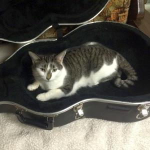 ギターを弾く手の動きをマッサージ替わりにする猫さん😽
