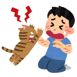 「浮気は許さニャイ!」 …野良猫の匂いがついた手にブチギレる猫😾