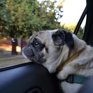 「やっちまった…」車のマフラーに顔を突っ込んたワンコの表情www