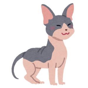 """「さすがスフィンクス…」猫の額に出現した""""シワ文字""""がミラクルすぎるw"""