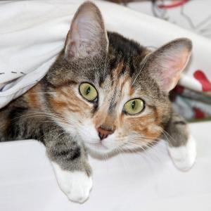 やっと付けてもらえた暖房の温風を全身で受け止めたい猫😸