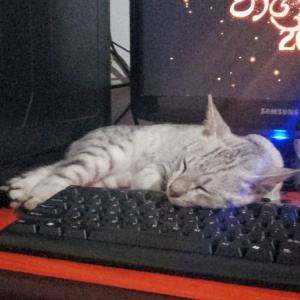 猫が作業の邪魔をするので机の上に「猫よけのトゲトゲ」を設置した結果…😅