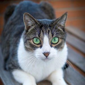 目撃情報多数! あるゲームハードがこの寒さで「猫ホイホイ」と化す😻