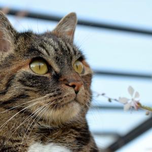 ウチの猫、「ネコバス」だったことが判明😅