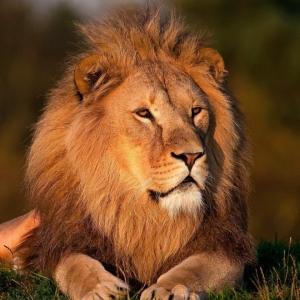 """うちの猫で「ライオンキング」の再現をしてたら""""ブチギレキャット""""になってしまったwww😾"""