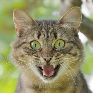 握ると中身がムニュッと出てくるあのオモチャを猫に見せてみた結果www