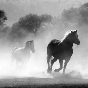 「昔の海外アニメみたいだ・・・」この馬、ブレーキ性能が高すぎるw