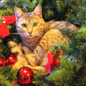 """各国のクリスマスにおける""""ネコ対策""""が斜め上すぎるwww"""
