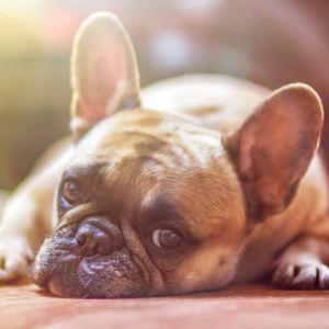 これを「犬」だと言い張る度胸を見習いたい…😅