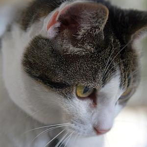 エアコンの上に登った猫を真下から撮影していた…次の瞬間😸
