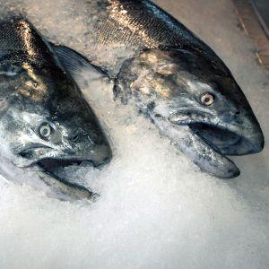 ウッソだろオイ……すごい状態で凍ってしまった魚が海外で発見される