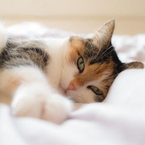 「なんというシンクロ率…w」猫の前でベッドを組み立てた結果😽