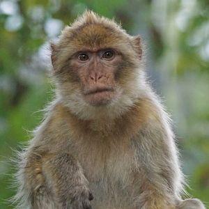 実家から「猿の大群が来た」と送られてきた動画が想像以上だったw