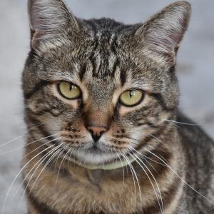 ずーっと暖房の前にいた猫さん、とんでもない顔になる🙀