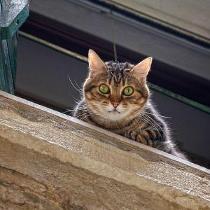"""いつも向かいの建物にいる猫の名前が知りたかったので窓に付箋で""""置き手紙""""をしたら…☺"""