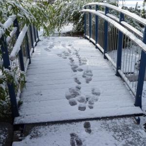 「雪で近所の歩道橋が超絶ハードモードだった…」衝撃的な光景が話題に😱