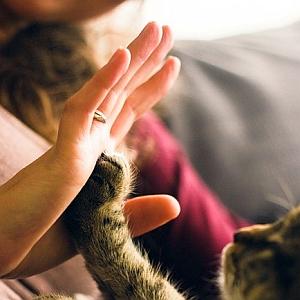 """排水溝に指輪を落とした!→""""猫の手""""を借りてみた結果www"""