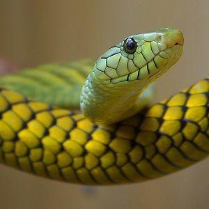 「無茶しやがって…」飼っているヘビに体の100倍はある『ダチョウの卵』を与えた結果😂