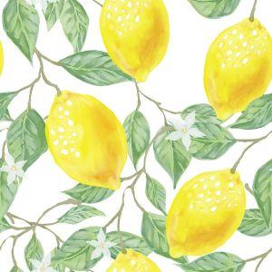 6年前、会社の庭にこっそり植えたレモンの木が…マジかよΣ(゚д゚||)