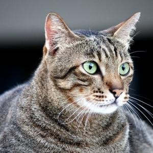 スマホをスワイプする飼い主を見た猫さん、何かに閃いてしまうww