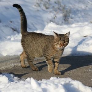 「お散歩したいけど雪の上は歩きたくない…」そんな猫さんのとった解決法😽