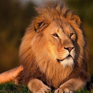 千葉の動物園で注文した「ライオンカレー」がどう見ても別の生き物にしか見えない…w