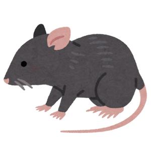 太り過ぎでマンホールの穴に嵌まってしまったネズミの救出劇(ドイツ)