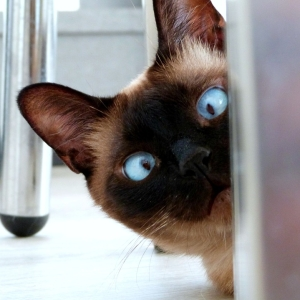 『猫は顔が入る隙間なら通り抜けられる』は嘘だったw
