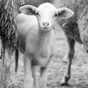 """""""子羊がミルクを飲むだけ""""のショーが最高すぎたww"""