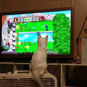 大胆すぎるポーズで飼い主のゲームを妨害する猫さんwww