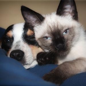 種を超えた友情。柵からおしりが抜けなくなってしまった子犬を助ける猫😼