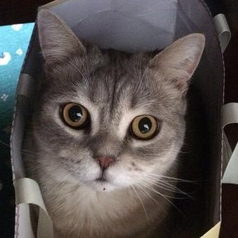 猫を動物病院に連れて行こうとする時の鳴き声が実にヤバいwww
