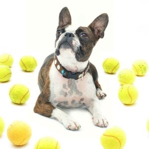 ウィンブルドン選手権で使われた『テニスボール』の再利用法が素敵すぎるw