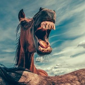 """牧場で撮った写真に写りこんだ""""恐ろしい顔""""。その正体は…😅"""