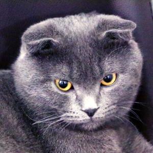 やだイケメン…思わず添い寝したくなる猫さんが発見される😼