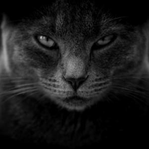 間違えて閉め出してしまったウチの猫が…ひぃッ😱