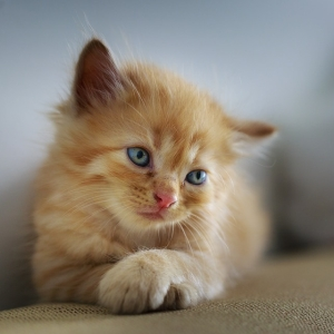 リビングに行ったら…猫がすっごくアンニュイな格好でくつろいでた😽