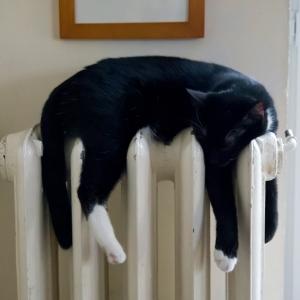 5月にしては寒い朝…うちのネコがとんでもない所で暖をとっていたwww