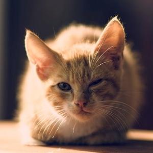 縁側に猫がやってきたので「今度は子猫も連れてきてよ-」と話しかけた…翌日の光景がコチラww