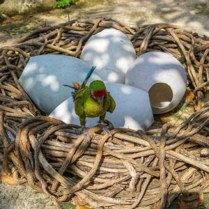 """あるツイ民による「インコの""""過剰産卵""""を防ぐ方法」が実にスマートw"""