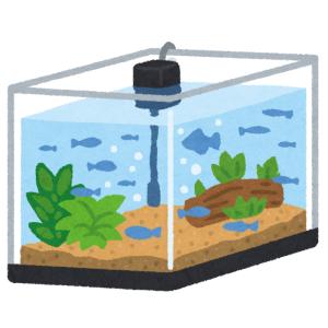 遊んでいる!? 水槽ポンプの浮力に弄ばれる『モノアラガイ(巻貝)』がカワイイw