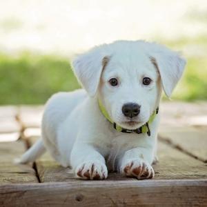 """なんともいじらしい……飼い主にバレバレな""""待ち伏せ""""をする子犬が可愛すぎる😂"""