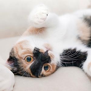 【超反応】暑さでダレていた6匹の猫さん達に「ごはんする?」と言ってみた結果www