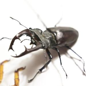 クワガタ型ラジコンの上にナウシカの「王蟲」を乗せた結果…いやあぁぁ😱
