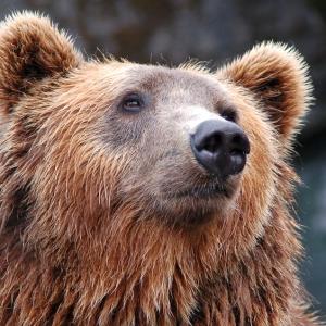 """「映画化決定だわw」…登別の『クマ牧場』にある""""歴代のボス熊""""紹介が面白すぎると話題にww"""