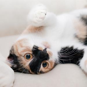 猫がやたらと頭をモノや壁にこすり付けるので獣医に診てもらった結果…