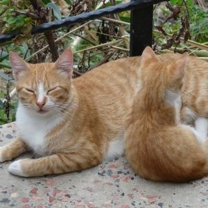 「中に人いるだろこれw」この猫、母乳のあげ方がクールすぎるwww