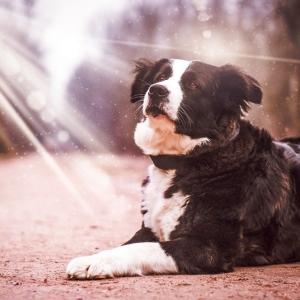 「我が家の犬が和室でパトラッシュと化していた…」一瞬ドキッとする写真が話題に😅