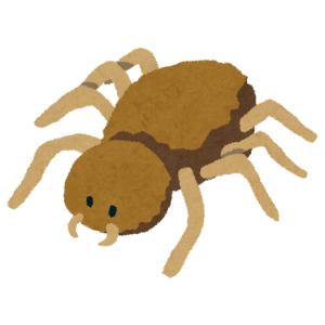 【益虫】最近家に住み着いたアシダカグモに冗談で「チャーシュー」をあげてみた結果…😲